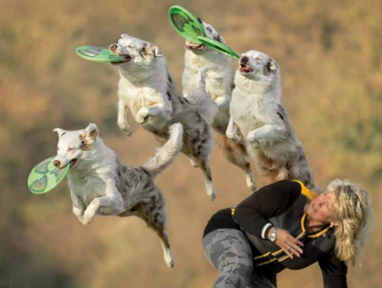 Springende honden