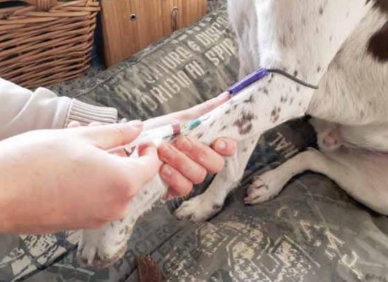 Bloedafname hond