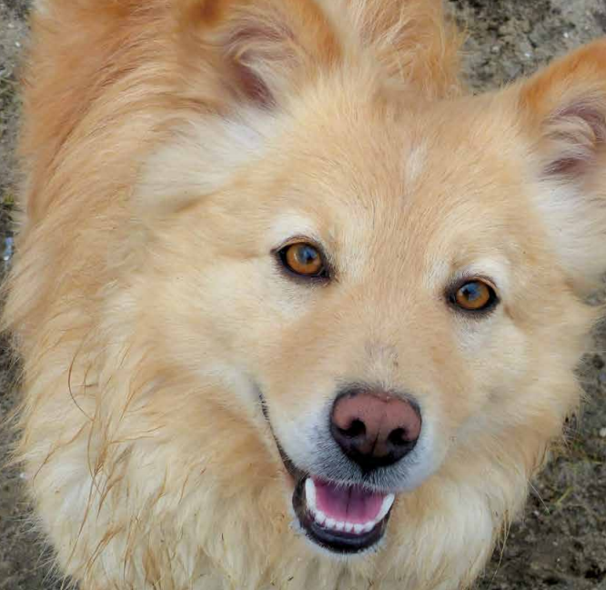 Hond kijkt in camera