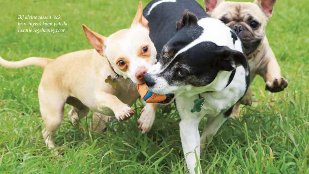 Veel voorkomende problemen aan de knie bij honden