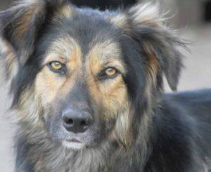 Erken de minder prettige eigenschappen van je hond