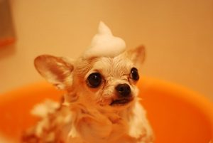 animal-blur-canine-485294