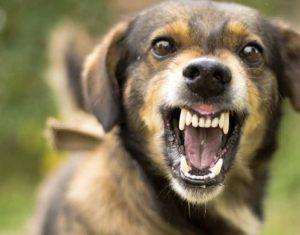 Agressie hond