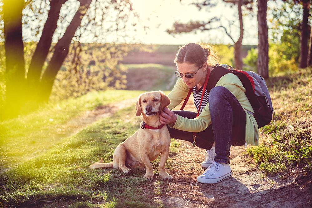 Vrouw controleert Hond op teken