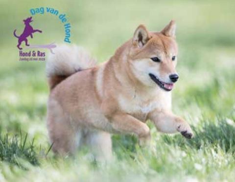 Dag van de Hond 2019