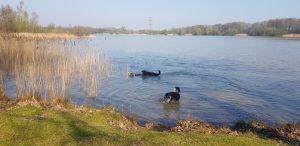 Honden in water