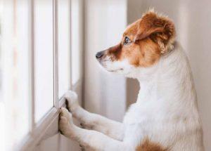Hond bij deur