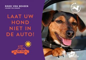 hond-in-auto-liggend-640