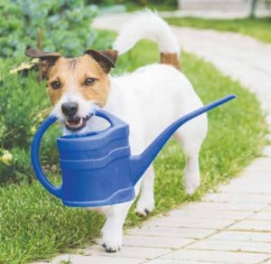 Hond met gieter