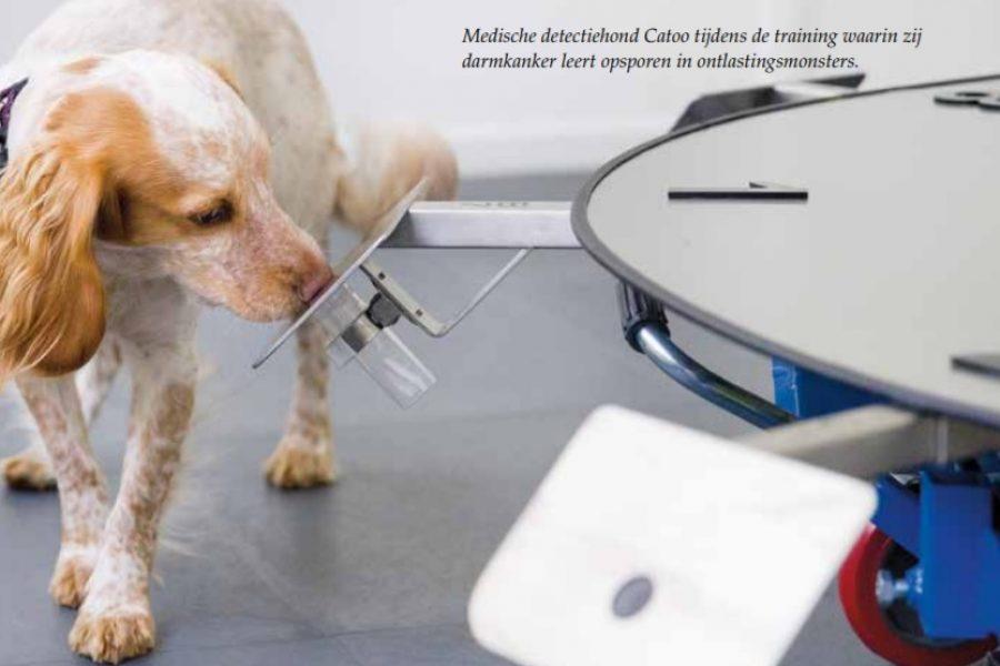 Medische detectiehond Catoo