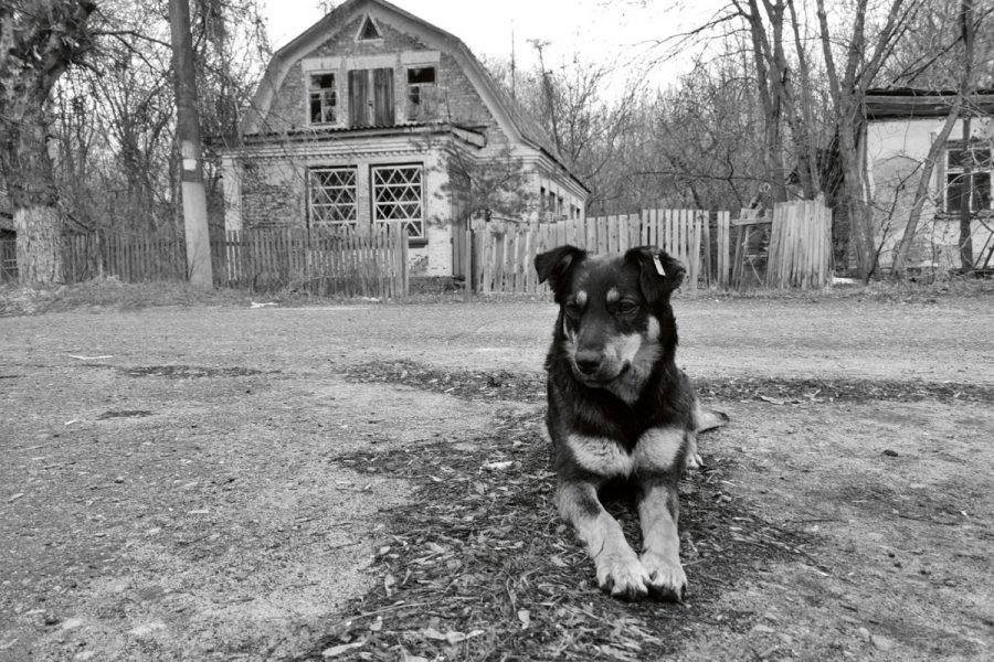 Chernobyl_Dogs_DOGS
