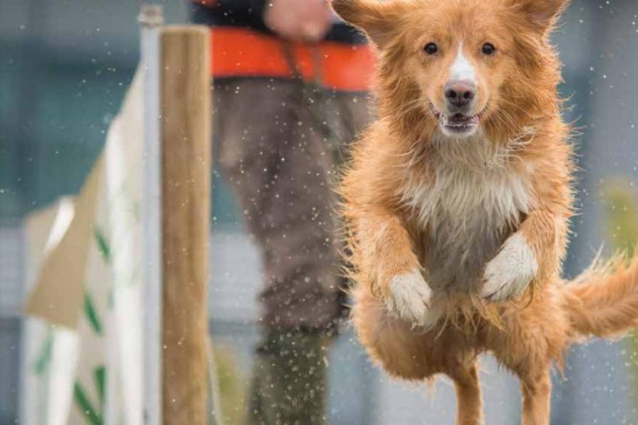 Springende hond