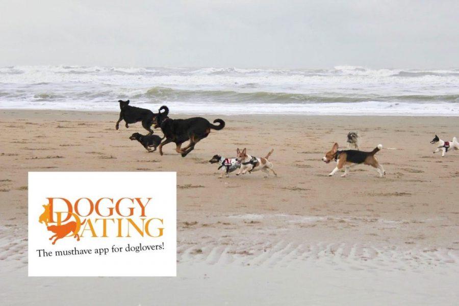 Doggydating honden in zee