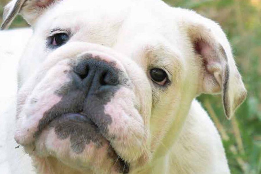 Gedrag-en-opvoeding-hond