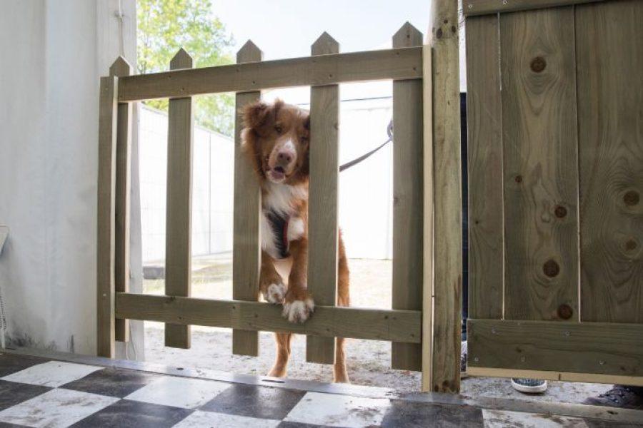 Hond in escaperoom