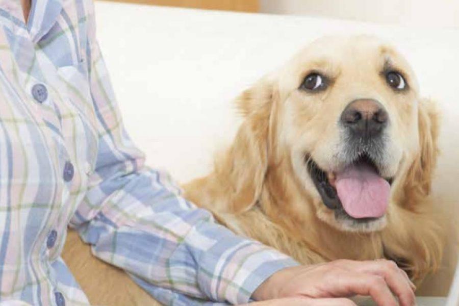 Hond kijkt naar baas