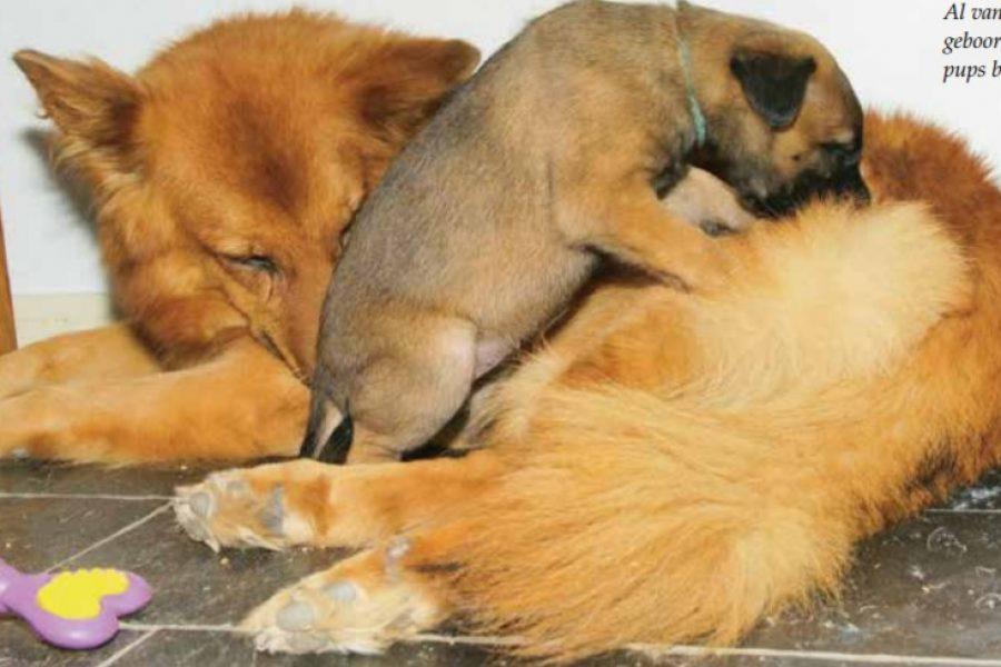 Moeder en pup