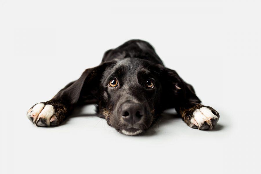Onze Hond afbeelding
