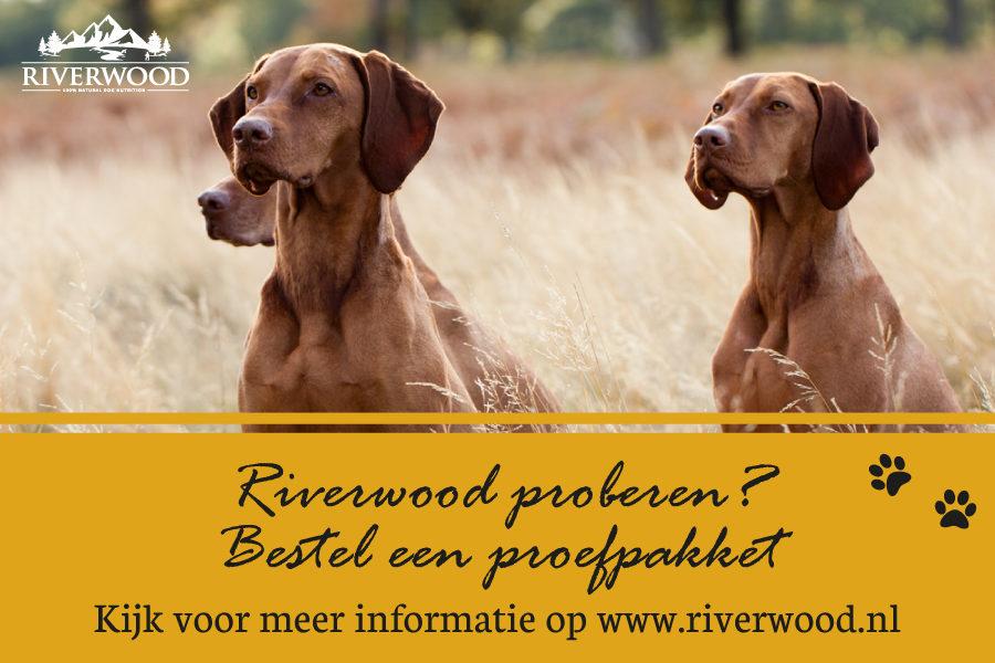 Riverwood-Hond-Advertorial-Afbeelding---Onze-Hond