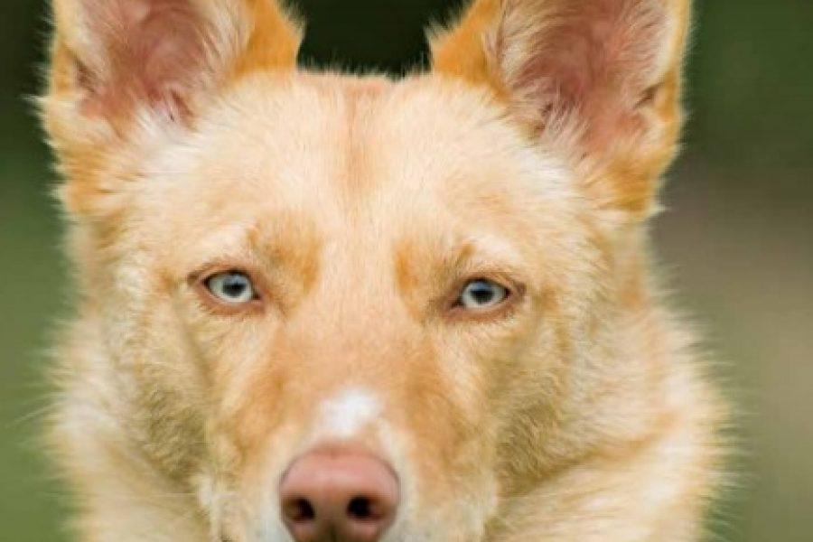 Sabi - Hond van de maand