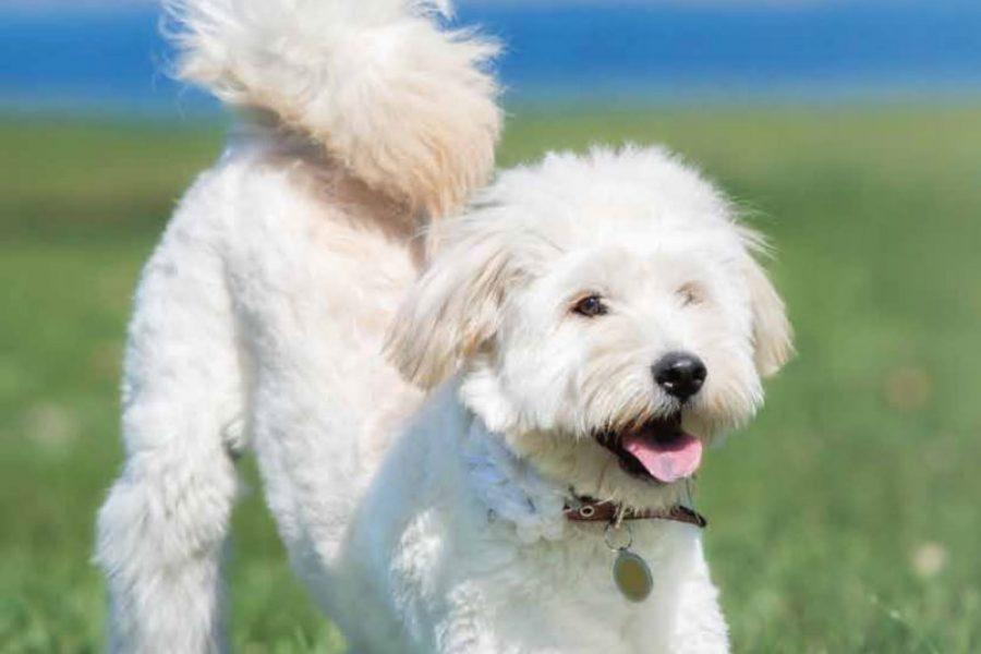 Wit-hondje-liggend-op-de-grond