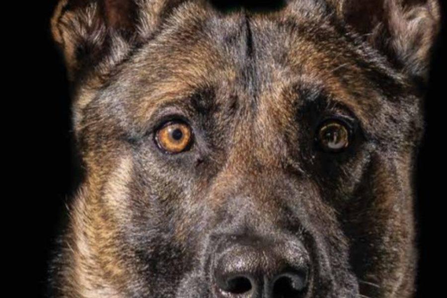 Bumper, de politiehond