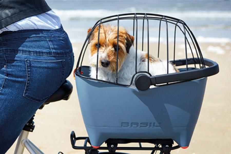 Hond in Basil Buddy