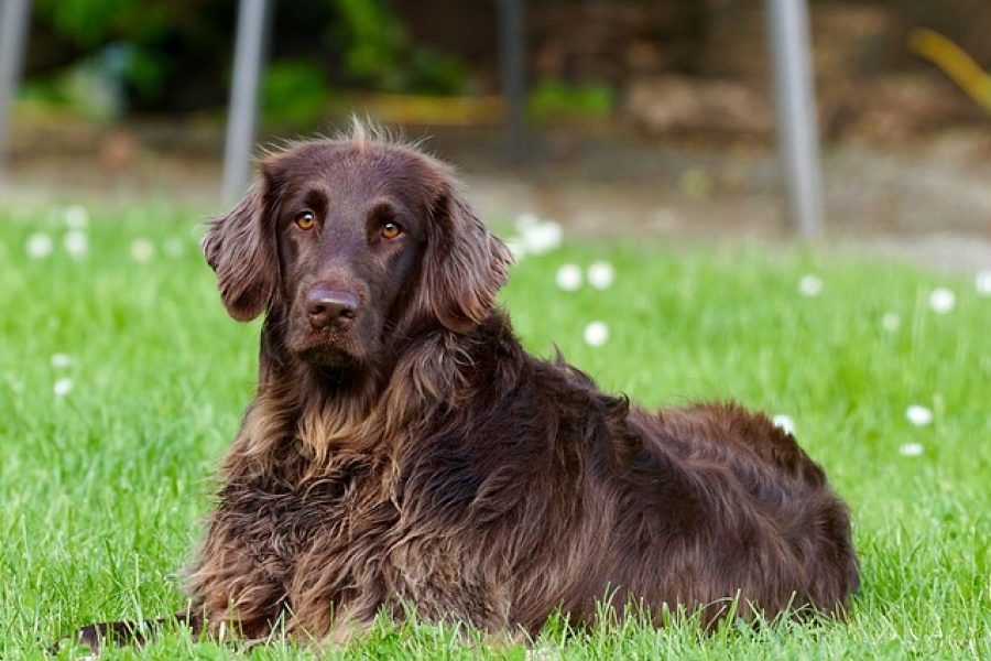 hond liggend in het gras