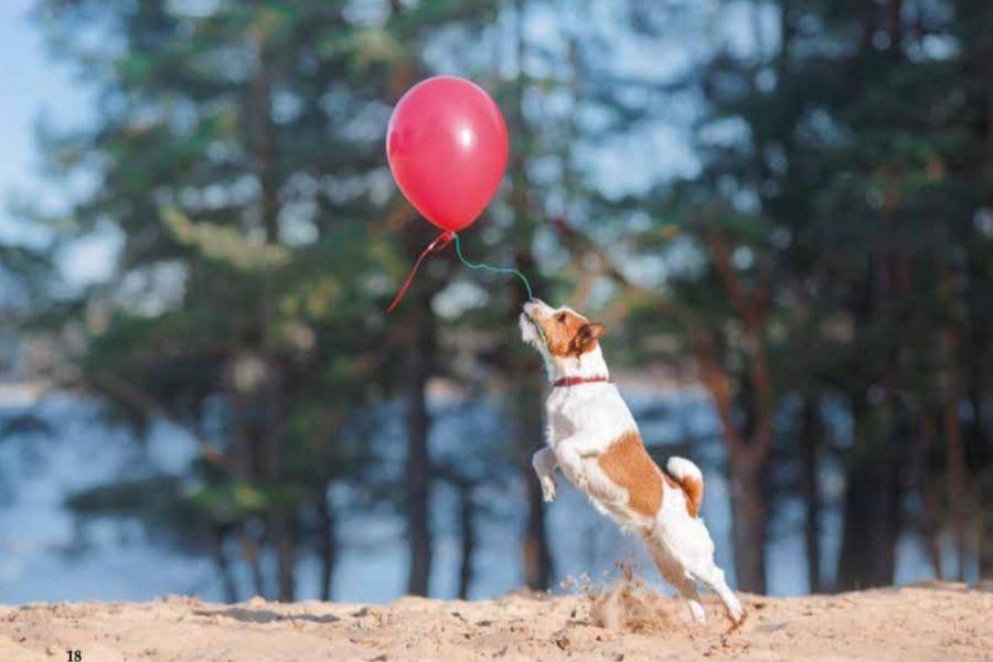 hond met ballon