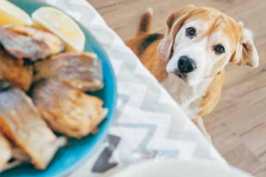 hond eten