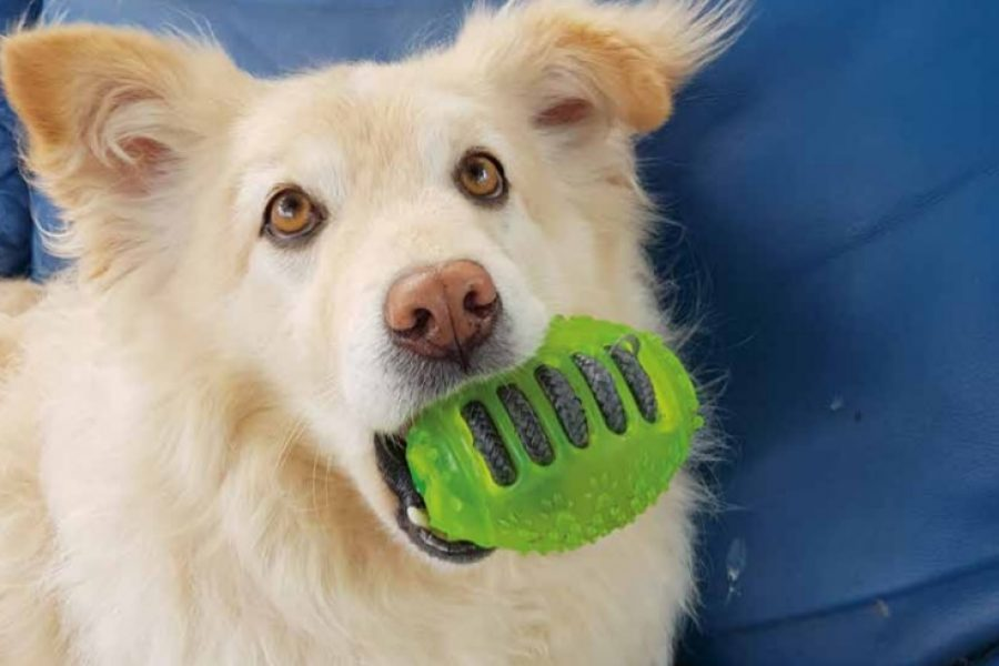 hond met speeltje