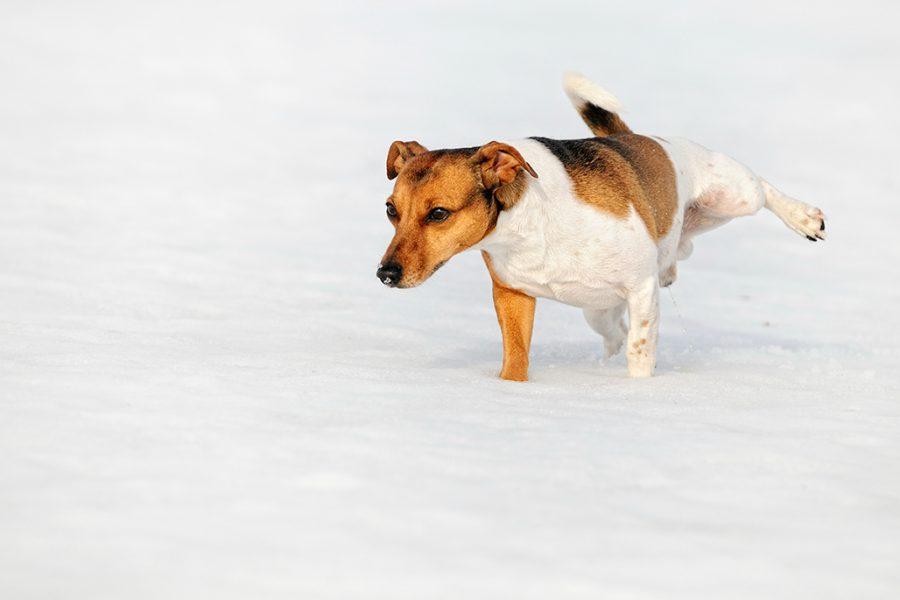 Markeren van honden