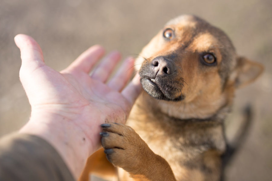 Dog,Weasel,Hand,On,Nature