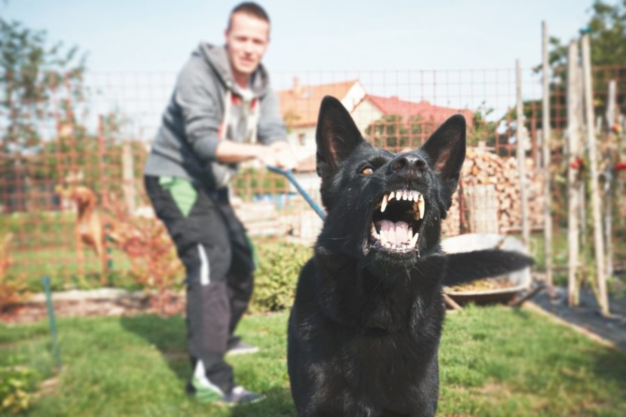 Aggressive,Dog,Is,Barking.,Young,Man,With,Angry,Black,Dog
